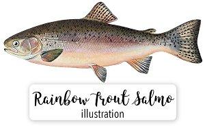 Rainbow Trout Watercolor Vintage