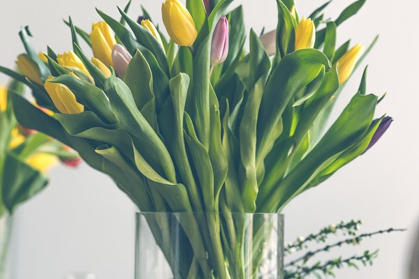 Nature Stock Photos: Dvoevnore travel photos - Multicolored tulips flowers bouquet