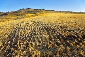 Crops after harvesting