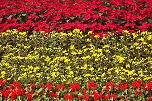 Multi-colour flower bed