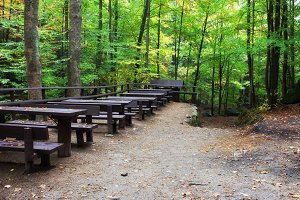 Tables and Benches in the Forest
