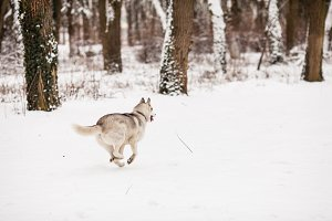 Cold winter walking with dog