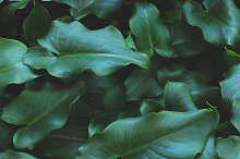 Tropical Leaves Background by  in Nature