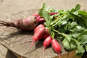 Fresh organic beets and radish