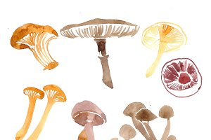 mushrooms watercolor