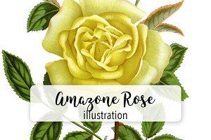 Flowers: Vintage Amazone Rose