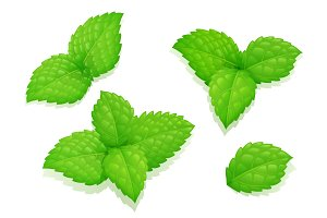 Mint leaves. Set natural aroma product.