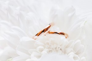 Wedding rings in white flower