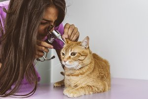 Veterinarian checking a cute cat