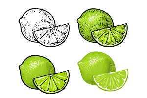 Lime slice and whole. Vector color vintage engraving and flat