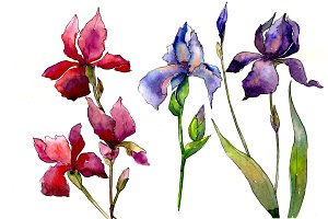 Red and purple irises flowers PNG