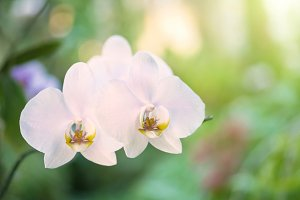 White orchids in tropical forest