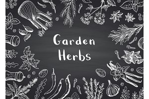 Vector hand drawn herbs and spices on black chalkboard background with place for text illustration