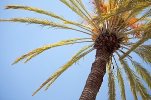 Palm Tree Abstract Against Blue Sky