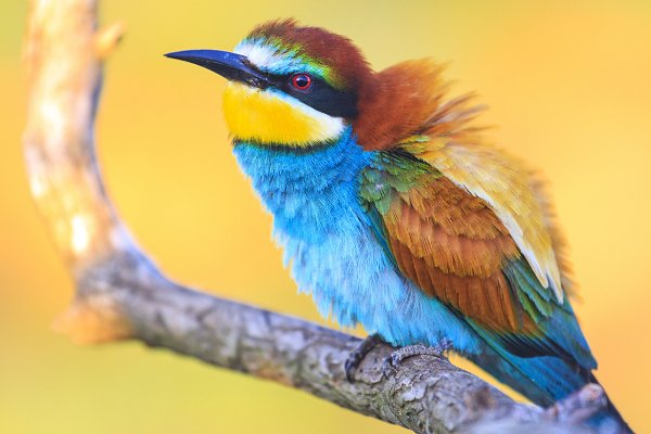Stock Photos: Pakosta - incredibly beautiful birds at sunrise