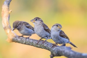 small birds sit in a row