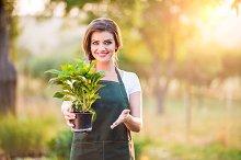 Gardener passing a seedling in flower pot, sunny nature