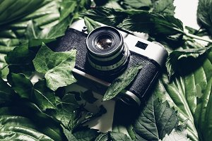 Retro film camera in green leaves