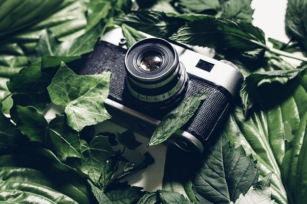 Stock Photos - Retro film camera in green leaves