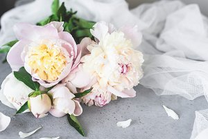 Pink and white pastel peony flowers