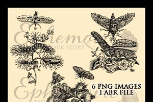 Vintage Botanical Photoshop Brushes