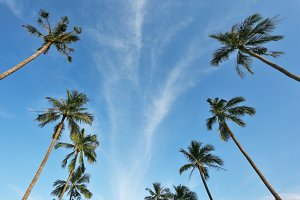 Palm avenue to the sea