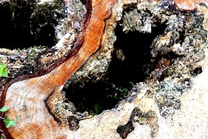 Abstract Hollow Tree Stump