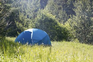 Green tent in the green summer forest at sunny day