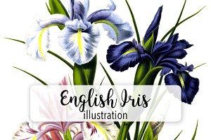 Florals: Vintage English Iris