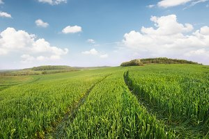 Agricultural landscape as a background