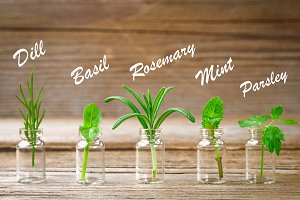 A bottle of essential oil with herbs of basil, rosemary, parsley, dill and mint, set on an old wooden background.