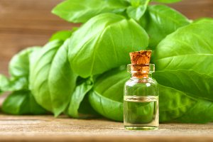 A bottle of basil essential oil with fresh basil leaves on a table.