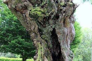Odd Tree Trunk