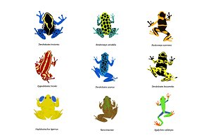 Set of different frogs, flat design.