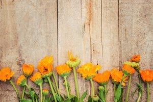 calendula extract and flowers