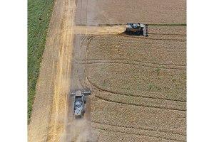 Harvesting wheat harvester
