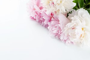 white and pink peonies