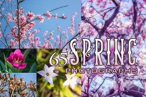 65 Spring Blossom Photos