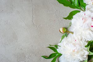 Textured background with peony