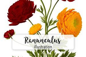 Florals: Red & Orange Ranunculus