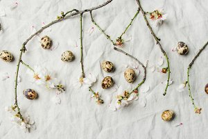 Easter background with eggs and almond blossom flowers