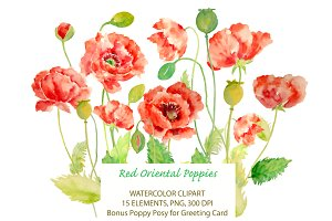Watercolor Oriental Red Poppies