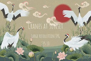 Cranes at sunset. Vector background