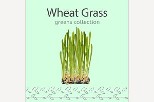 Wheat Grass Image