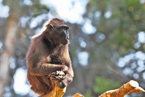 Little monkey sitting