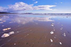 Coast Pacific