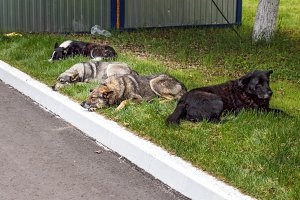 Four homeless dogs resting on grass