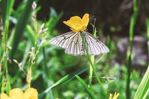 Tender white butterfly hiding
