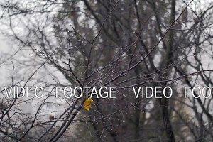 Bare tree with last leaf under autumn snowfall
