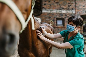 Horse veterinary